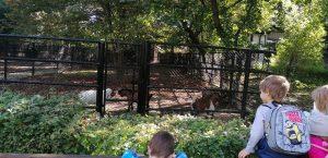 ausflug der gelben gruppe in den zoo - dsbu